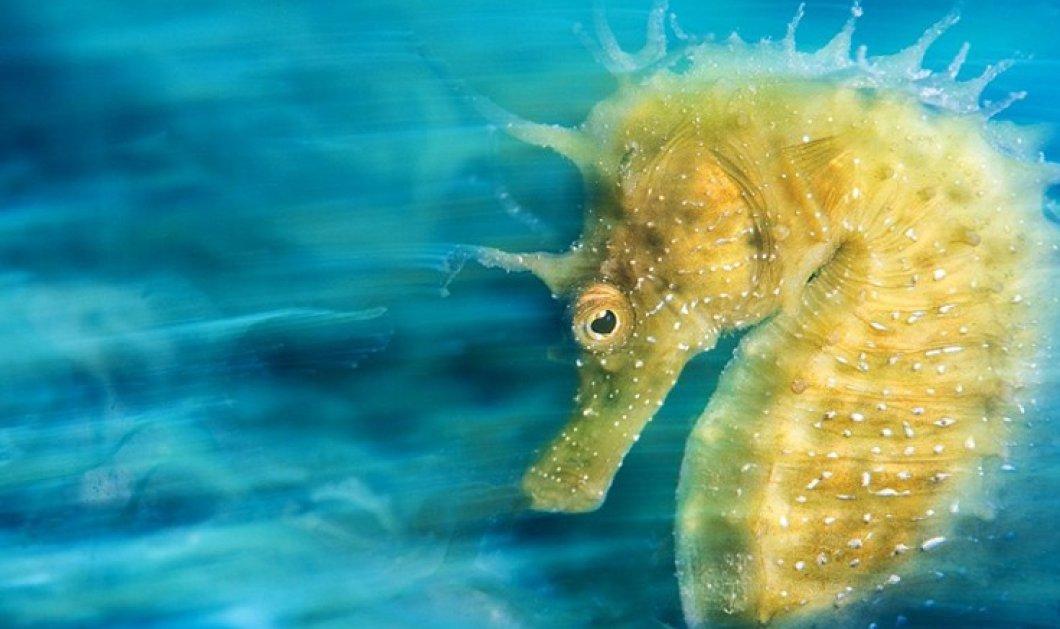 Οι υποβρύχιες φωτογραφίες που βραβεύτηκαν με την Gold να ξεχωρίζει  - Κυρίως Φωτογραφία - Gallery - Video