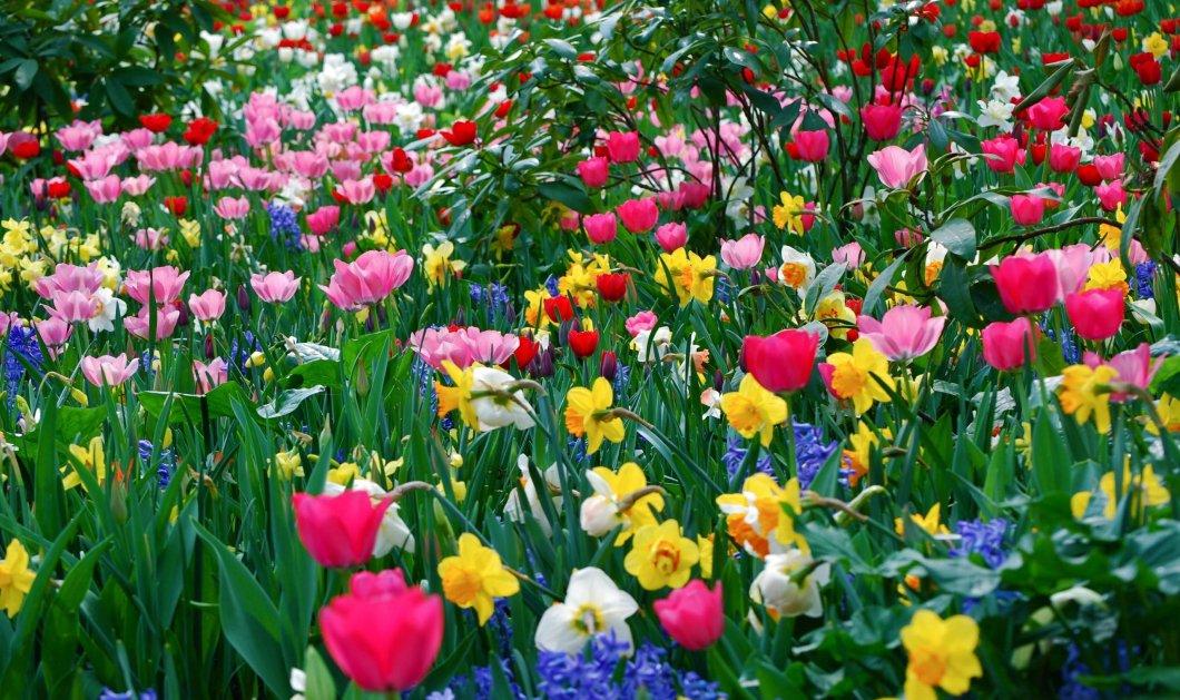 Εκπληκτικό: Τα λουλούδια της άνοιξης ανθίζουν σε ένα μόλις βίντεο & γεμίζουν χρώμα τις οθόνες μας - Κυρίως Φωτογραφία - Gallery - Video