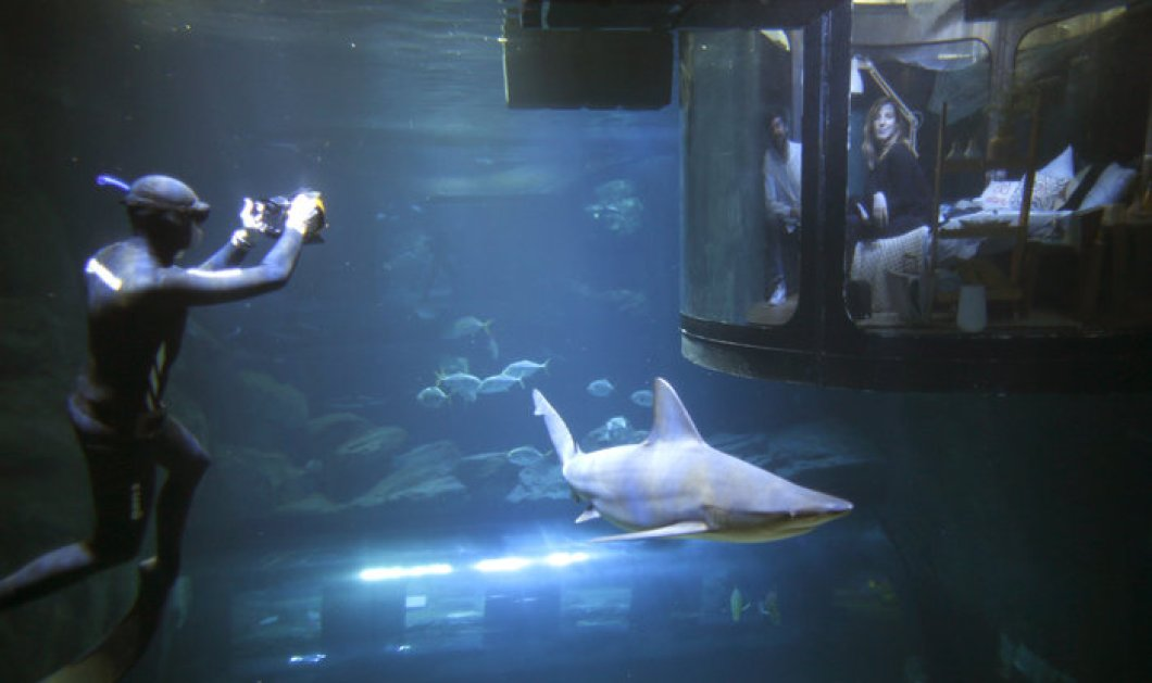 Και το δώρο; Μια νύχτα ύπνος σε δωμάτιο με καρχαρίες σε ενυδρείο του Παρισιού  - Κυρίως Φωτογραφία - Gallery - Video