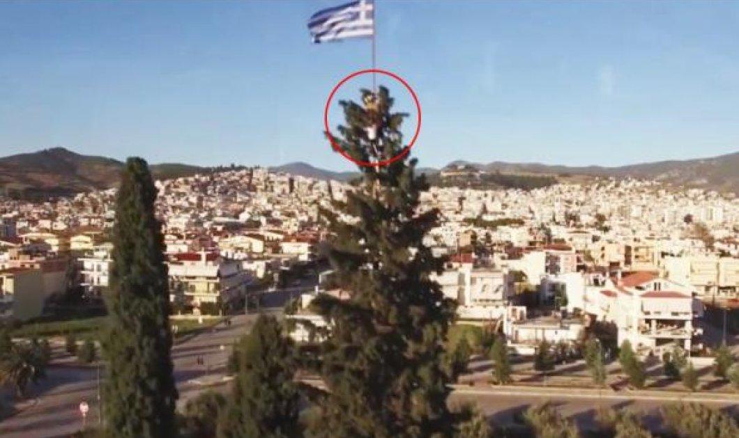 76χρονος Λαμιώτης ανέβασε σε κυπαρίσσι 30μ. την ελληνική σημαία - Με κίνδυνο της ζωής του (Βίντεο) - Κυρίως Φωτογραφία - Gallery - Video