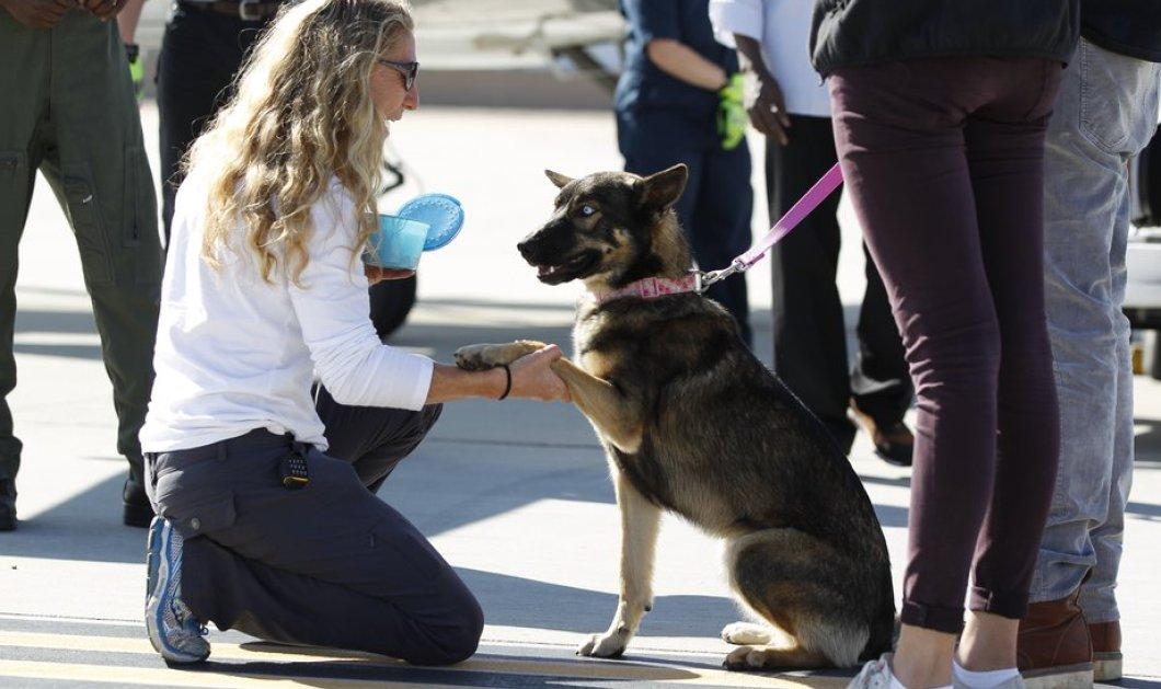H Λούνα η σκυλίτσα - ναυαγός επιβίωσε για 5 εβδομάδες σε νησί & έφτασε μόνη της στη στεριά (Φωτο - Βίντεο) - Κυρίως Φωτογραφία - Gallery - Video