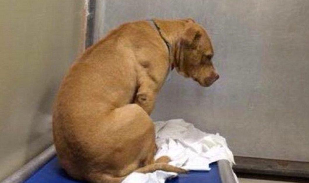Pet story of the day: Ευαίσθητος σκυλάκος έπεσε σε κατάθλιψη επειδή δεν τον υιοθέτησαν  - Κυρίως Φωτογραφία - Gallery - Video