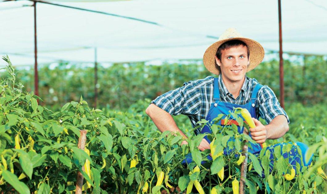 Επιδοτήσεις έως και 42.000 ευρώ για τους νέους αγρότες - Ποιοι είναι οι δικαιούχοι;  - Κυρίως Φωτογραφία - Gallery - Video