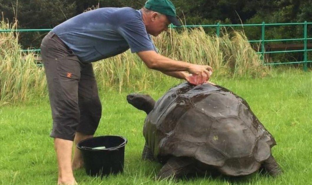 """Γνωρίστε τον γερό-Τζόναθαν, το γηραιότερο ζώο του πλανήτη: Είναι """"μόλις"""" 184 ετών! - Κυρίως Φωτογραφία - Gallery - Video"""