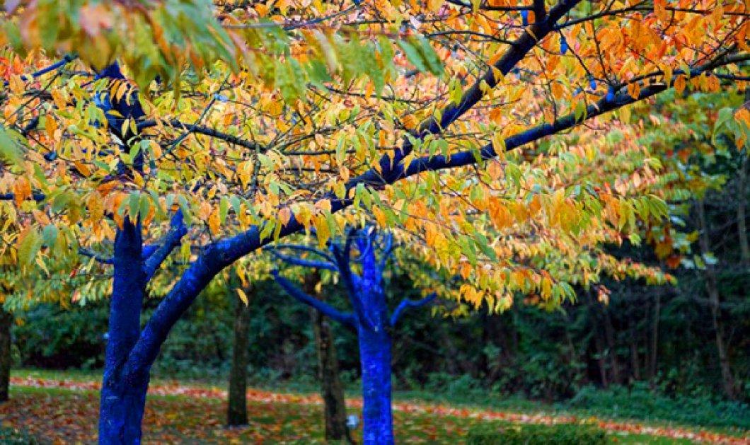 Made in Greece στην Αυστραλία: Αυτά είναι τα υπέροχα μπλέ δέντρα του Κωνσταντίνου Δημόπουλου   - Κυρίως Φωτογραφία - Gallery - Video