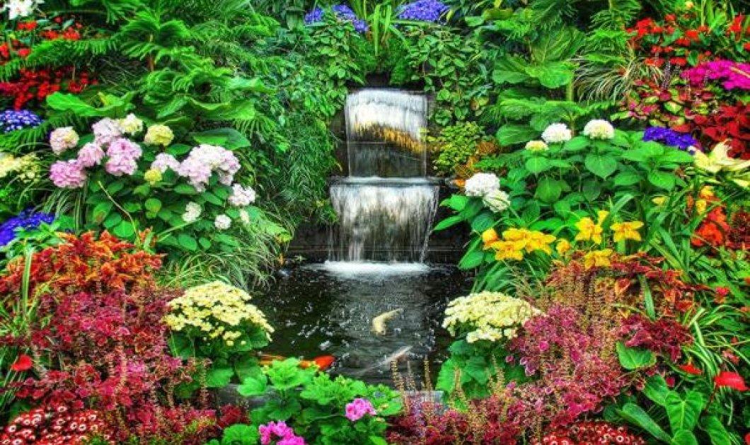 Ο κήπος σου πολύχρωμος & μυρωδάτος: Βάλε νεραγκούλες, φελίτσια, μολόχες, μίλιον μπελς - Κυρίως Φωτογραφία - Gallery - Video