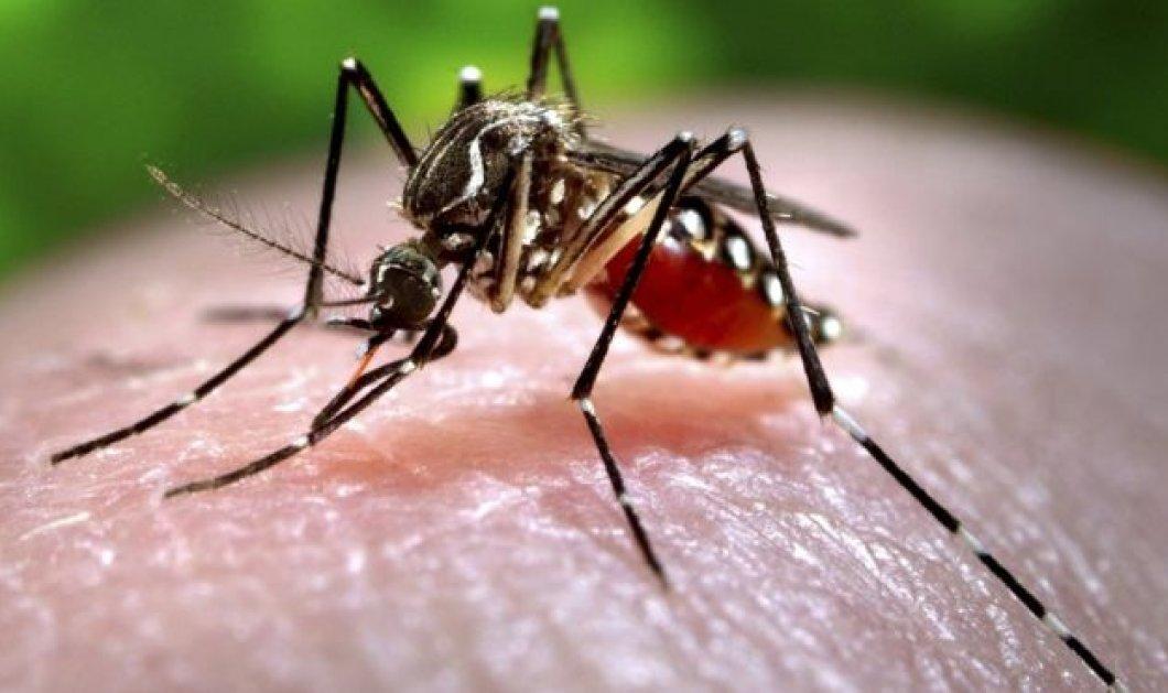 Το απόλυτο tip για να καταπολεμήστε τα κουνούπια  - Απαλλαγείτε... μια & έξω - Κυρίως Φωτογραφία - Gallery - Video