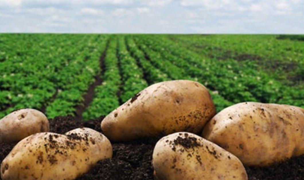 Αγόρασε πατάτες από Πλανόδιους χρυσάφι: Είδαν το γεμάτο πορτοφόλι & σούφρωσαν 1000 ευρώ - Κυρίως Φωτογραφία - Gallery - Video