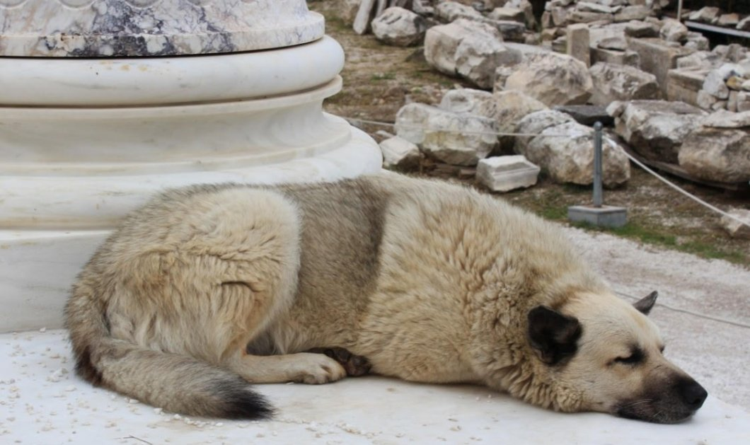 Ένα βίντεο που θα σας κάνει να δακρύσετε: Η Αθήνα μέσα από τα μάτια ενός αδέσποτου σκύλου - Κυρίως Φωτογραφία - Gallery - Video