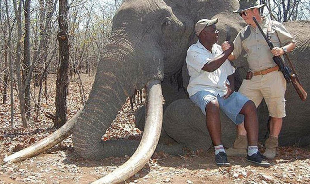 Πρόστιμο 52.000 ευρώ στον Γερμανό που σκότωσε το μεγαλύτερο ελέφαντα της Αφρικής - Φώτο  - Κυρίως Φωτογραφία - Gallery - Video