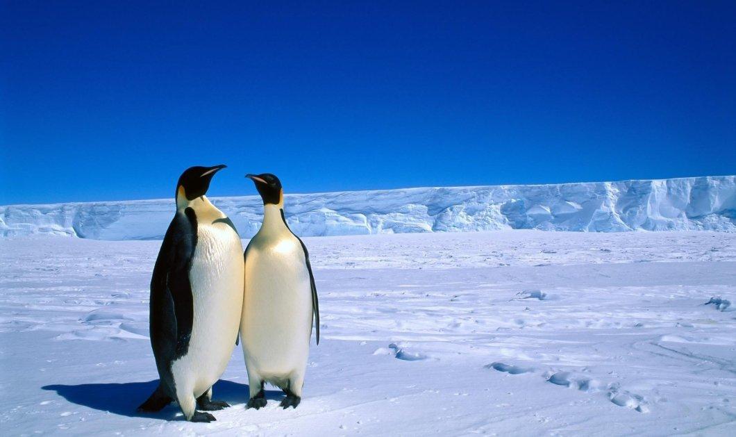 Ταξίδι στην Ανταρκτική από ψηλά: Δείτε το βίντεο που τραβήχτηκε με drone - Κυρίως Φωτογραφία - Gallery - Video