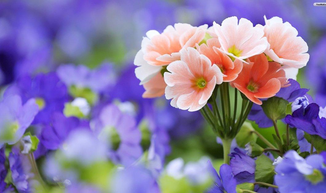 Το πιο ανοιξιάτικο tip: Πώς να κάνετε τα λουλούδια σας να κρατούν περισσότερο την μυρωδιά & την ζωντάνια τους - Κυρίως Φωτογραφία - Gallery - Video