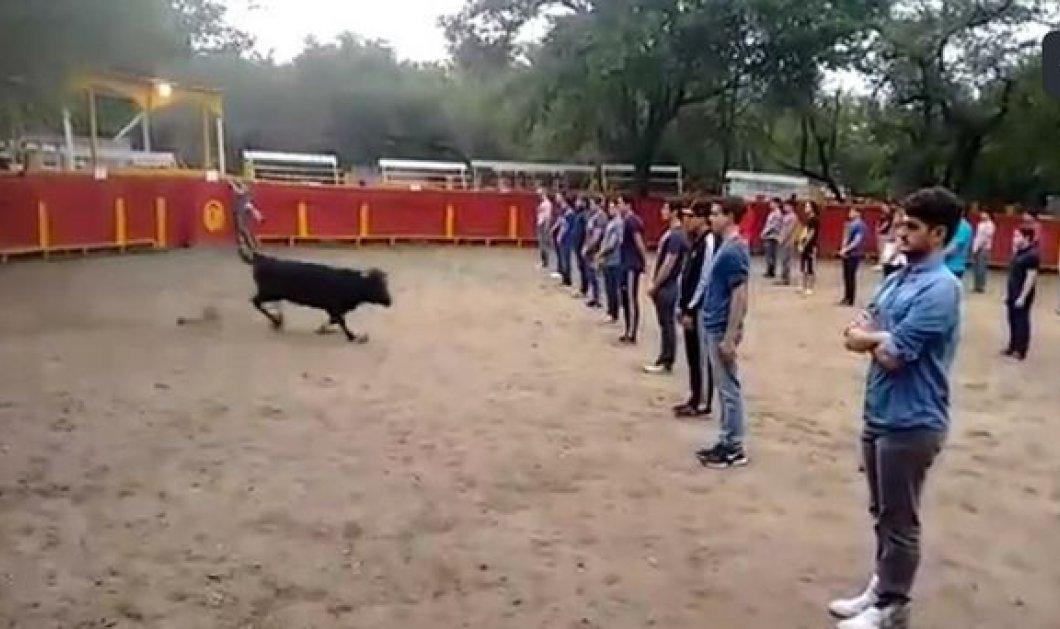 Πείραμα για γερά στομάχια: Φοιτητές στέκονται μπροστά σε ταύρο για να δουν  αν θα επιτεθεί! - Κυρίως Φωτογραφία - Gallery - Video