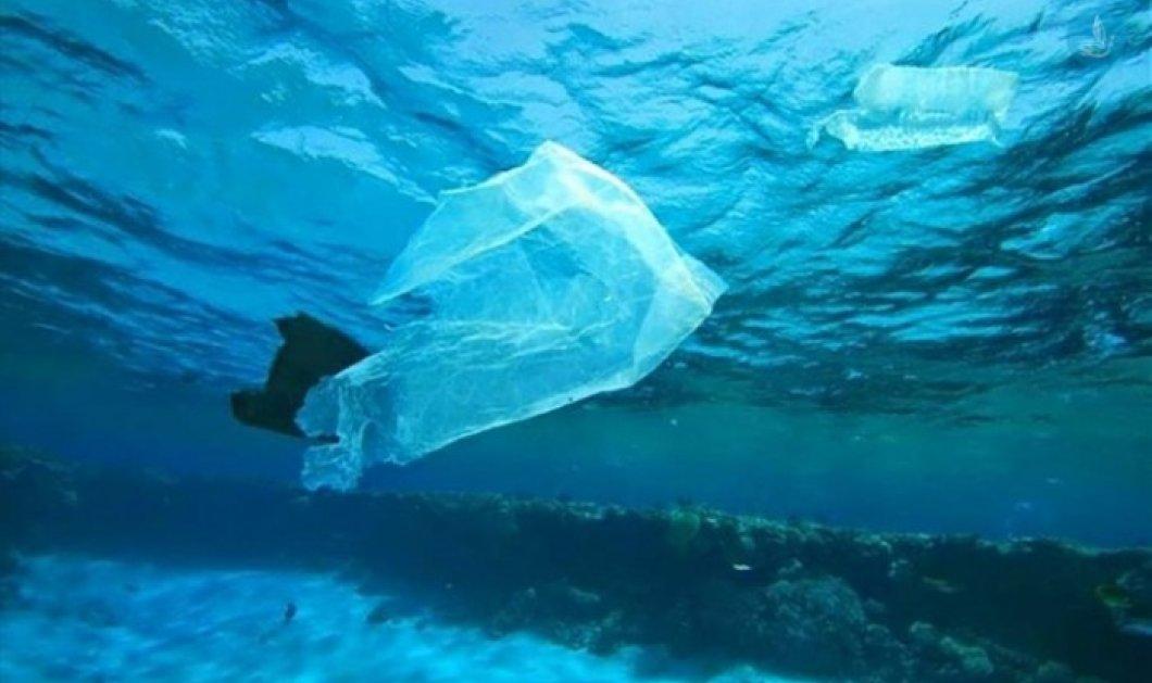 Το βίντεο που πρέπει να δείτε: Η διαδρομή των πλαστικών από τις ακτές στο στομάχι μας! - Κυρίως Φωτογραφία - Gallery - Video