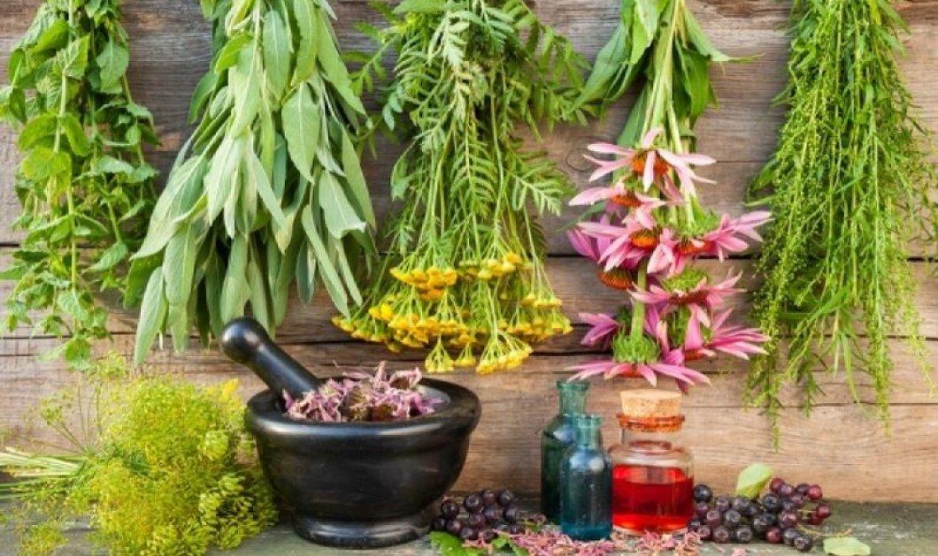 8 θαυματουργά βότανα που ρίχνουν τη χοληστερίνη - Οι πιστοί μας σύμμαχοι από την φύση  - Κυρίως Φωτογραφία - Gallery - Video