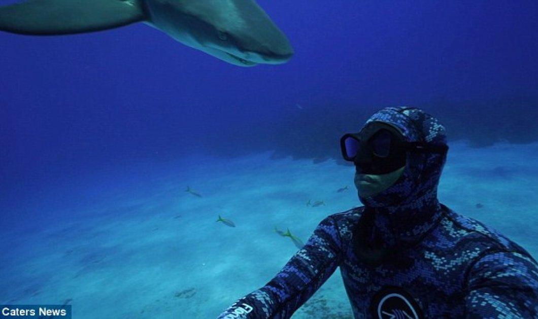 Μπαχάμες: Δείτε την σε μετωπική σύγκρουση δύτη με τυφλό καρχαρία - ΒΙΝΤΕΟ   - Κυρίως Φωτογραφία - Gallery - Video