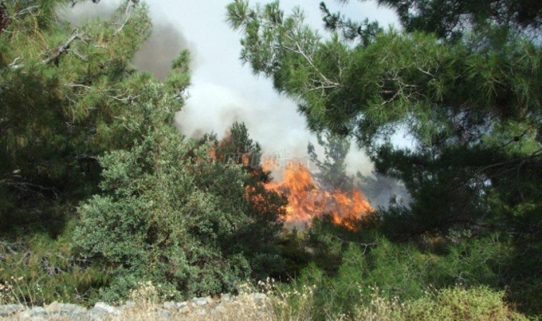 Μεγάλη πυρκαγιά μαίνεται στην Μυτιλήνη - Xωρίς ρεύμα όλη η Λέσβος - Κυρίως Φωτογραφία - Gallery - Video