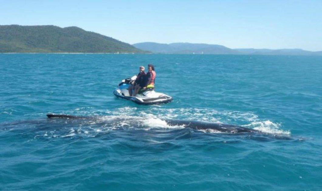 Βίντεο: Στην Αυστραλία ή σε τρώνε οι καρχαρίες ή κάνεις jet ski με φάλαινες - Μια θάλασσα-περιπέτεια! - Κυρίως Φωτογραφία - Gallery - Video