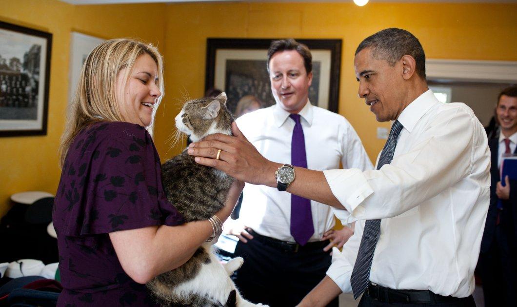 Ποιος είναι ο μόνος ένοικος που παραμένει στην Πρωθυπουργική κατοικία του Κάμερον; Γνωρίστε τον γάτο Λάρι - Κυρίως Φωτογραφία - Gallery - Video