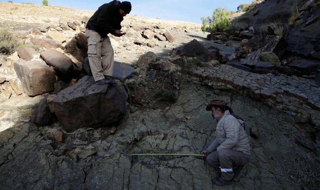 Βρέθηκε η πατούσα ενός τρομερού σαρκοφάγου δεινoσαύρου που έζησε πριν 80 εκ χρόνια - 1,2 μέτρα μήκος - Κυρίως Φωτογραφία - Gallery - Video