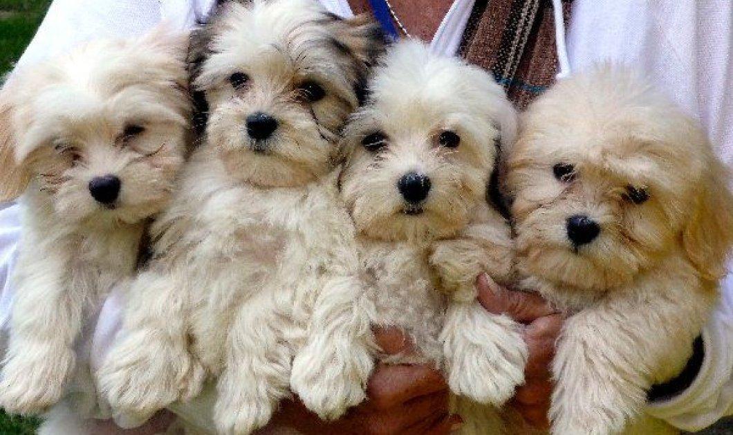 Σάλος με την τύφλωση και τον θάνατο 6 σκυλάκων σε τεστ για υαλουρονικό  - Κυρίως Φωτογραφία - Gallery - Video