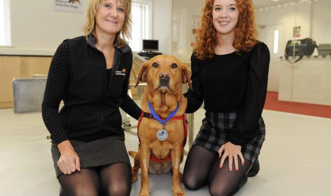 Γνωρίστε την Daisy:  Ο σκύλος που έχει εντοπίσει πάνω από 550 περιπτώσεις καρκίνου – Έσωσε την ζωή του ιδιοκτήτη της - Κυρίως Φωτογραφία - Gallery - Video