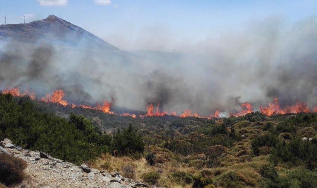 Δύσκολη μάχη με τις φλόγες στο Πόρτο Λάφια της Καρύστου και στο Αλιβέρι - Υπό έλεγχο οι φωτιές σε Λακωνία και Μέγαρα - Κυρίως Φωτογραφία - Gallery - Video
