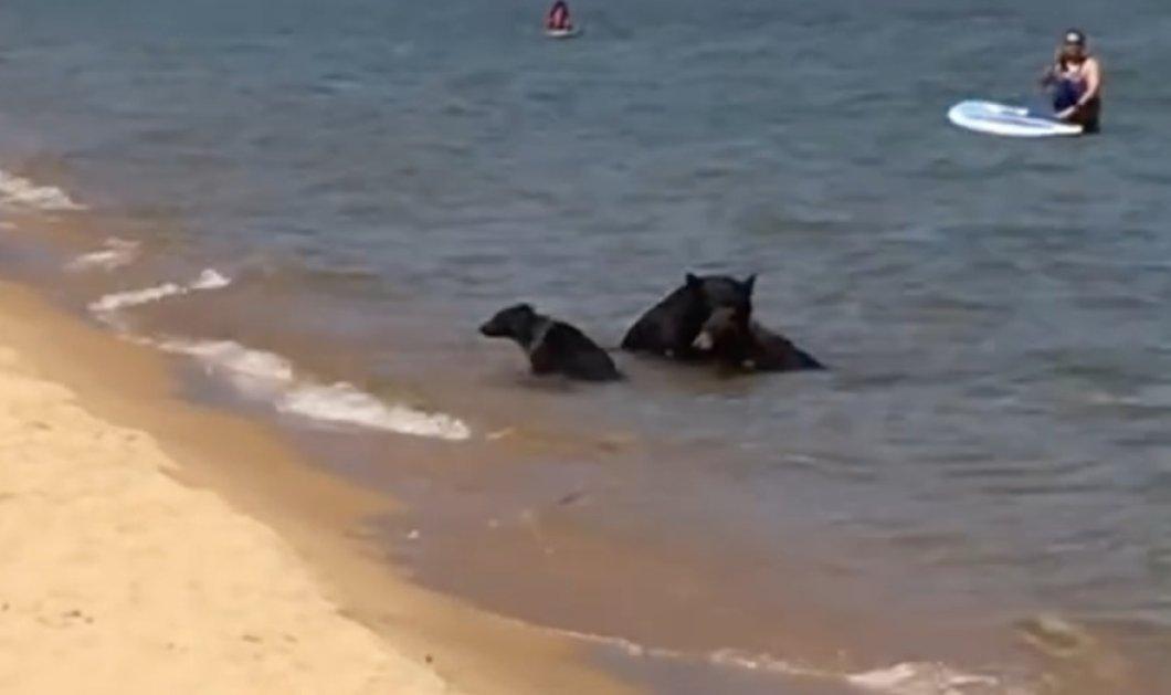 Smile βίντεο ημέρας: Οικογένεια τροφαντών αρκούδων έπεσαν σε λίμνη για να δροσιστούν - Κυρίως Φωτογραφία - Gallery - Video