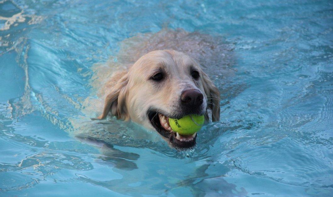 Βίντεο: Ο παράδεισος των σκύλων με εσωτερική πισίνα, γήπεδα με γρασίδι για ατέλειωτα παιχνίδια... ακόμη και σπα - Κυρίως Φωτογραφία - Gallery - Video