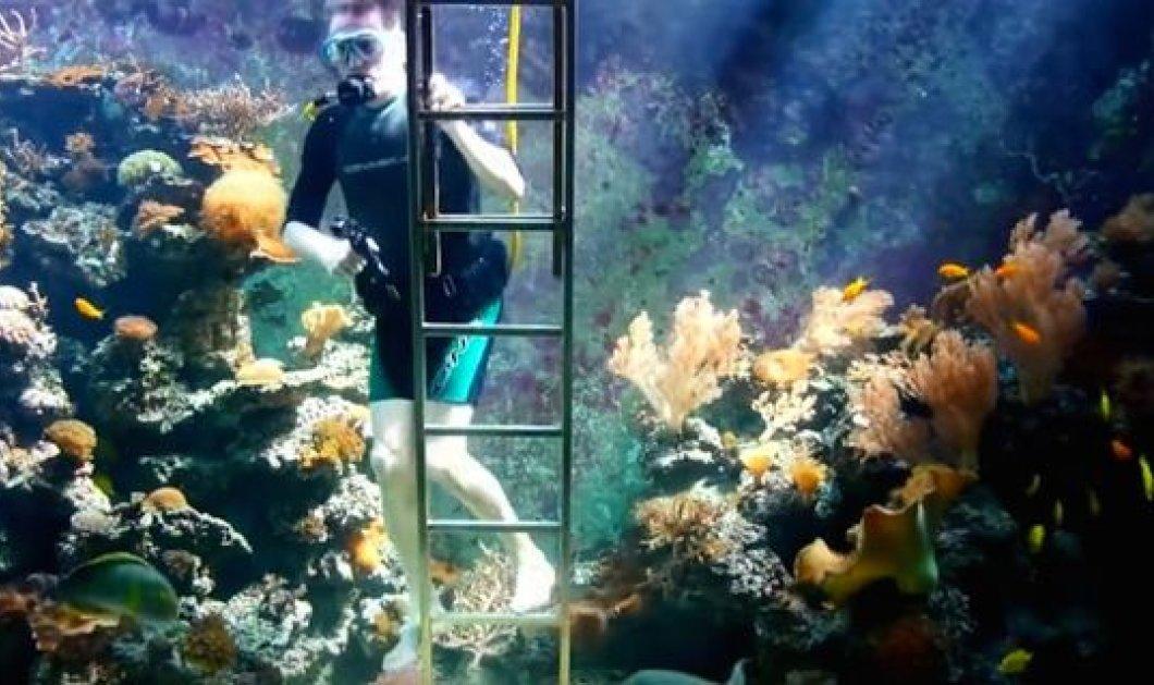 Ιδιόρρυθμος λάτρης του βυθού έφτιαξε ενυδρείο μέσα στο σπίτι του & κολυμπάει με τα ψάρια   - Κυρίως Φωτογραφία - Gallery - Video