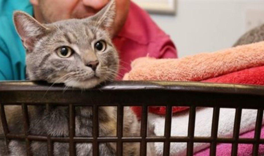 Γάτος Βεγγάλης επέζησε αν και «στύφτηκε» μέσα στο πλυντήριο στους 60 βαθμούς - Του αρέσει να κοιμάται εκεί - Κυρίως Φωτογραφία - Gallery - Video