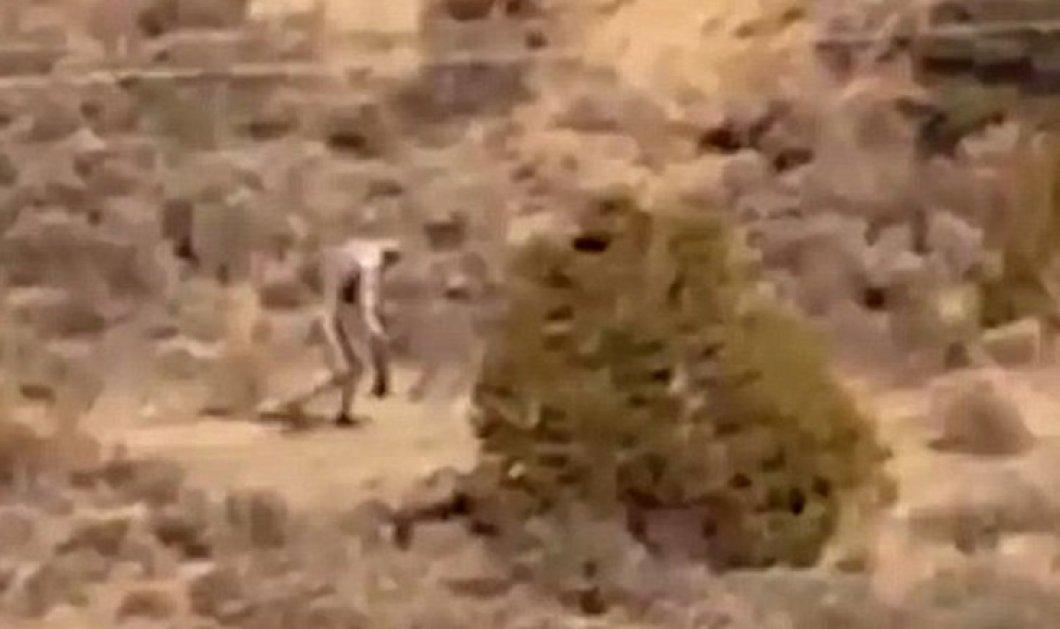 Βίντεο: Μυστηριώδες πλάσμα με τη μορφή χιμπατζή βρέθηκε στην Πορτογαλία - Είναι το θρυλικό τσουπακάμπρα; - Κυρίως Φωτογραφία - Gallery - Video