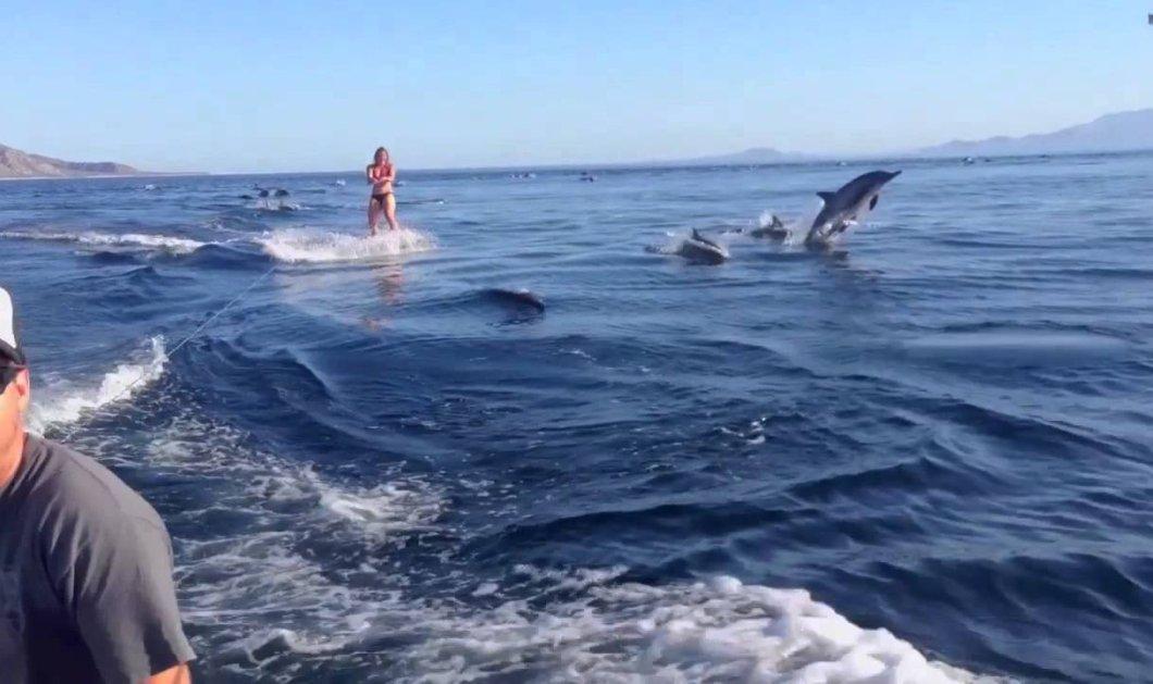 Το βίντεο του καλοκαιριού! 50 δελφίνια κάνουν ...σκι πίσω από μια όμορφη σκιέρ- Εκπληκτικές εικόνες  - Κυρίως Φωτογραφία - Gallery - Video