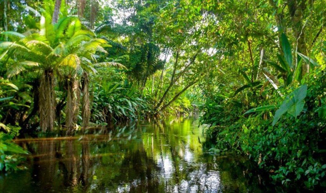 Κραυγή αγωνίας για το περιβάλλον: Σε λιγότερο από 100 χρόνια η άγρια φύση θα έχει σχεδόν εξαφανιστεί - Κυρίως Φωτογραφία - Gallery - Video