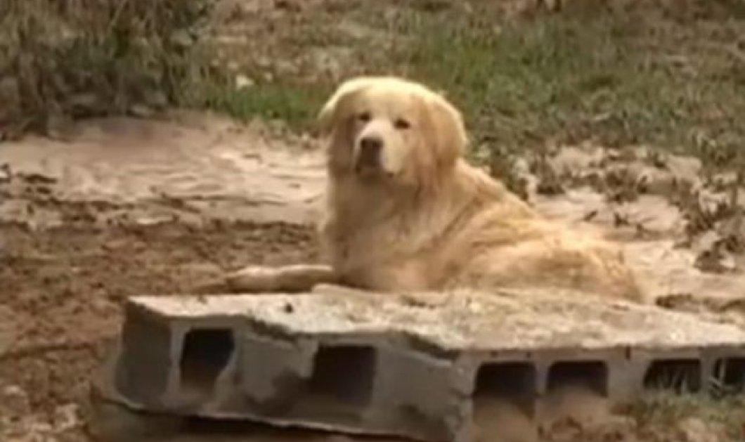 Συγκινητικό: Ο αφοσιωμένος σκύλος δεν άφησε να πάρουν μακριά του το 77χρονο αφεντικό του που έχασε τη ζωή του στη Λακωνία - Κυρίως Φωτογραφία - Gallery - Video