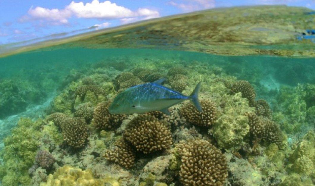 """Τι κάνει για την """"πατρίδα"""" του τη Χαβάη ο Ομπάμα; Γιγάντιο-θαλάσσιο πάρκο 1.500.000 τμ 50 φορές πιο μεγάλο από τα νησιά!!!    - Κυρίως Φωτογραφία - Gallery - Video"""