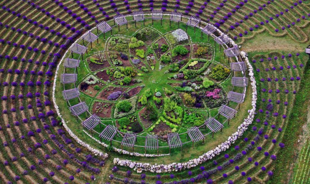 Λαβύρινθος από μοσχομυριστή λεβάντα διακοσμεί αγρόκτημα & εντυπωσιάζει - Δείτε τα κλικς - Κυρίως Φωτογραφία - Gallery - Video