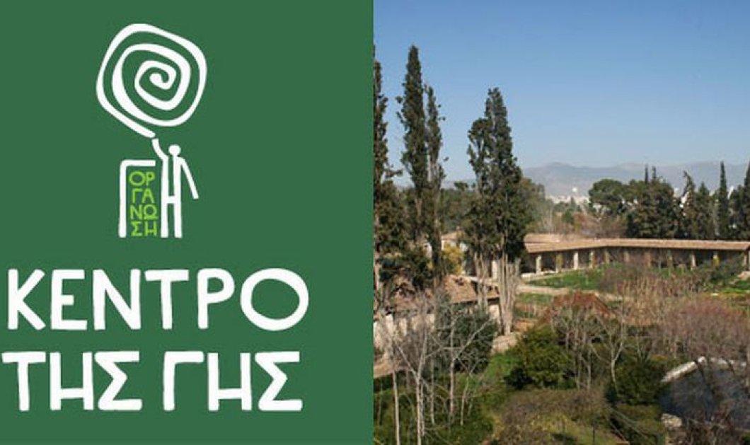 "Made in Greece η Οργάνωση ""ΓΗ"" - Αναδείχθηκε η κορυφαία πρωτοβουλία για το περιβάλλον στον κόσμο - Κυρίως Φωτογραφία - Gallery - Video"