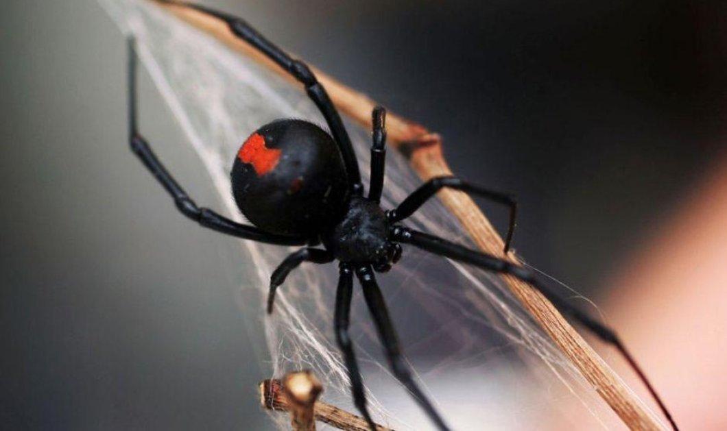 Μην σου τύχει: Δηλητηριώδης αράχνη δάγκωσε 21χρονο στο πέος για δεύτερη φορά - Είχε πάει σε χημική τουαλέτα  - Κυρίως Φωτογραφία - Gallery - Video