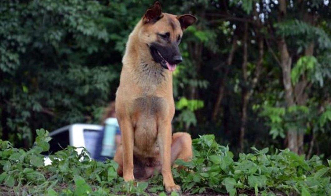 Συγκίνηση με τον σκύλο που σκοτώθηκε στο δρόμο για να περιμένει το αφεντικό του επί 1 χρόνο - Κυρίως Φωτογραφία - Gallery - Video