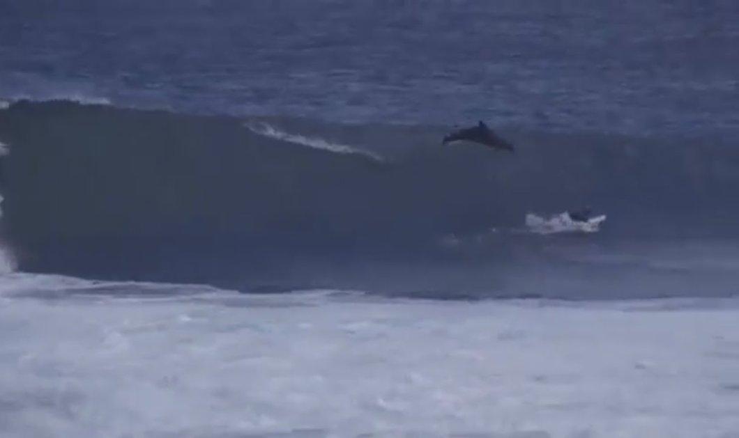 Βίντεο ημέρας: Τεράστιο δελφίνι έπεσε πάνω σε σέρφερ σκίζοντας κύμα 5 μέτρων - Ψύχραιμος ο νέος...  - Κυρίως Φωτογραφία - Gallery - Video