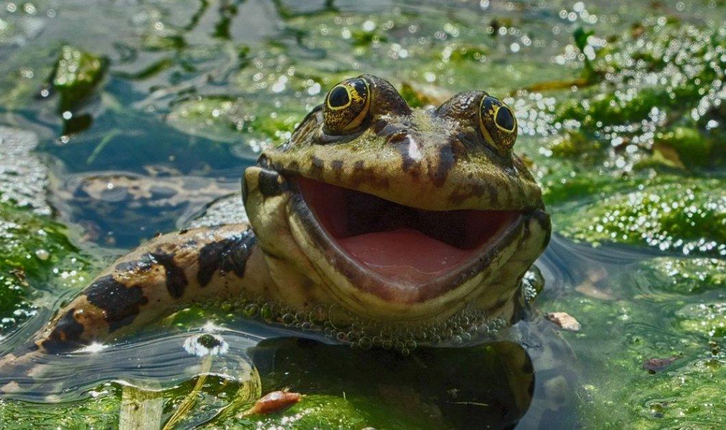 """Όταν η άγρια ζωή έχει...κέφια! """"Αστεία κλικ"""" με πρωταγωνιστές ζώα, στον πιο χαρούμενο διαγωνισμό φωτογραφίας - Κυρίως Φωτογραφία - Gallery - Video"""