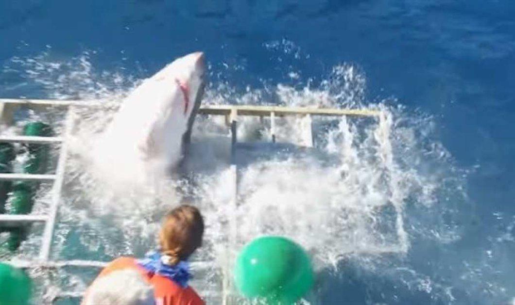 Ο μεγάλος εφιάλτης: Λευκός καρχαρίας μπήκε στο κλουβί με τον δύτη μέσα & έγινε ο χαμός (βίντεο) - Κυρίως Φωτογραφία - Gallery - Video