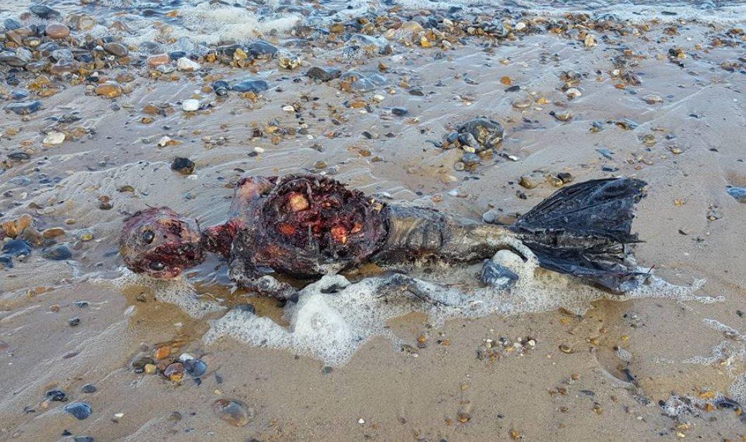 Πέπλο μυστηρίου με περίεργες φωτό από ακτή της Αγγλίας: Βρέθηκε νεκρή γοργόνα; - Κυρίως Φωτογραφία - Gallery - Video