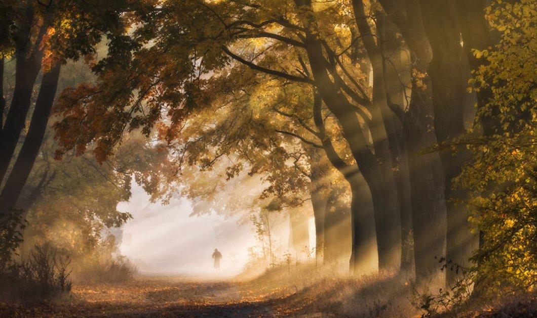 Σε αυτό το πάρκο της Πολωνίας χτυπά η καρδιά του Φθινοπώρου: Δείτε υπέροχες εικόνες - Κυρίως Φωτογραφία - Gallery - Video