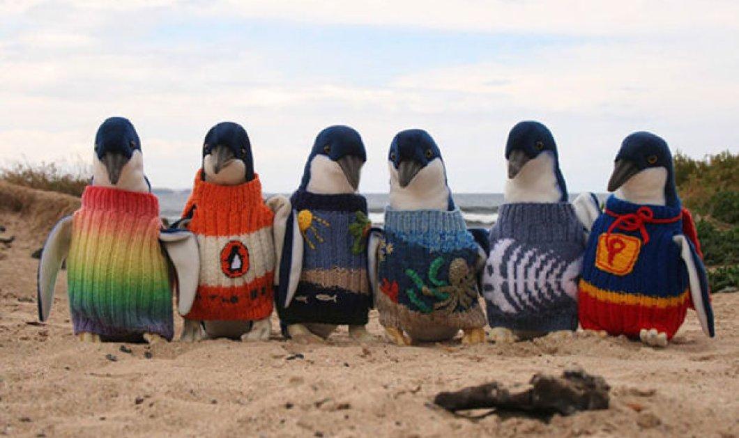 Αξιολάτρευτο! 22 χαριτωμένα ζωάκια ετοιμάστηκαν για το χειμώνα φορώντας απίθανα πουλοβεράκια - Κυρίως Φωτογραφία - Gallery - Video