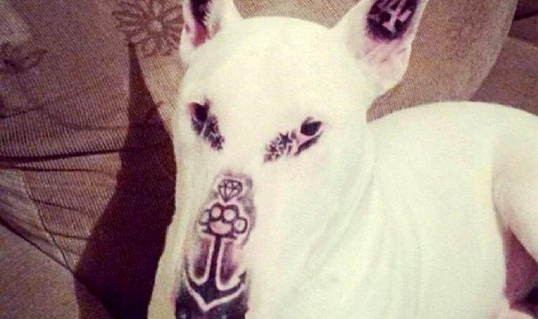 Σάλος με tattoo artist που ξεπέρασε τα όρια: Έκανε στον σκύλο του 5 τατουάζ & προκάλεσε θύελλα αντιδράσεων - Κυρίως Φωτογραφία - Gallery - Video