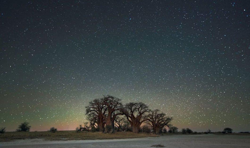 «Diamond Nights»: Φωτό από τα γηραιότερα δέντρα του κόσμου με φόντο τα αστέρια & τον νυχτερινό ουρανό - Κυρίως Φωτογραφία - Gallery - Video