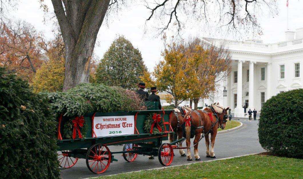 Η Μισέλ Ομπάμα και τα ανίψια της παρέλαβαν σε ένα κάρο με 2 άλογα το φετινό χριστουγεννιάτικο δέντρο του Λευκού Οίκου (φωτό, βίντεο) - Κυρίως Φωτογραφία - Gallery - Video