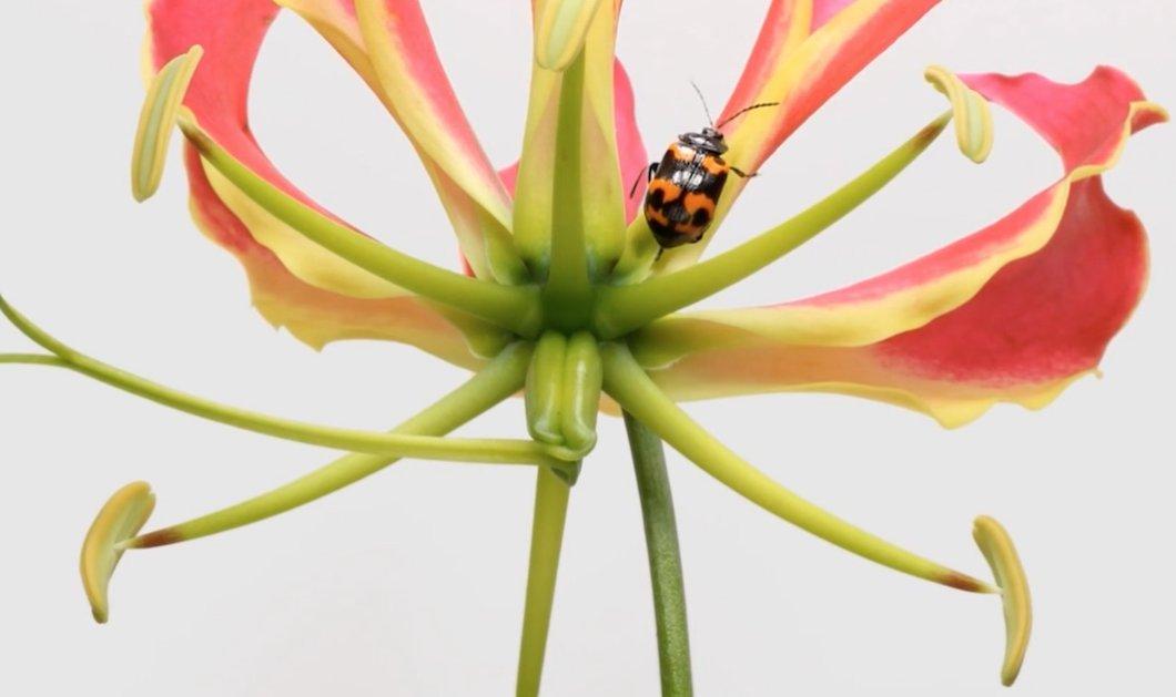 """Το βίντεο του μήνα από το National Geographic: Ο """"χορός"""" των λουλουδιών με τα έντομα! Μην το χάσετε - Κυρίως Φωτογραφία - Gallery - Video"""